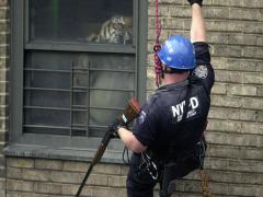 A police officer hanging down the side of a building looks into an apartment to see a fully grown tiger leaping into view
